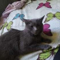 Ищю хорошие руки для моей кошки, в г.Ташкент