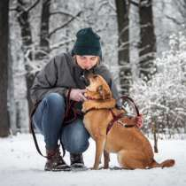 Идеальная собака в добрые руки, в Москве