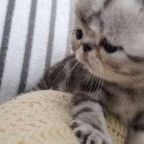 Котята ищут новый дом, в г.Лимбург-на-Лане