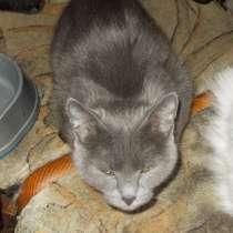 Русская Голубая отдам кошку в добрые руки, в Челябинске