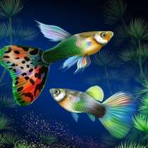 Аквариумные рыбки. Гуппи, в Москве