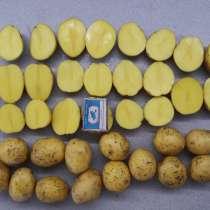 Обмен семенного картофеля на автомобиль, в Кемерове