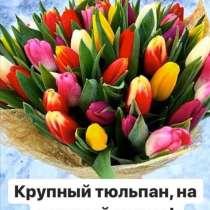 Качественный сочинский тюльпан, в Новосибирске