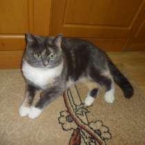 Котята от 2х кошек и 2х котов, в г.Мариуполь