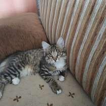 Отдам котёнка, в Чите