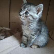 Котята в дар, в г.Гомель