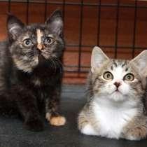 Котята в добрые руки, в Калуге
