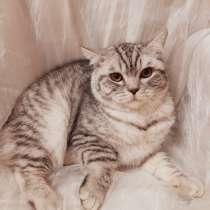 Кот на вязку, в г.Бенидорм