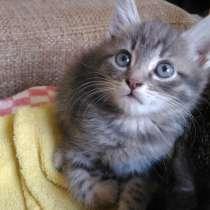 Котенок 2 месяца, мальчик, в Ростове-на-Дону