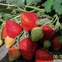 Плодовые и декоративные растения, в Курске