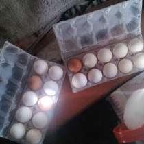 Яйца домашние, в Иркутске