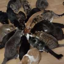 Отдадим кошек в хорошие руки. Кототеремок, в Москве