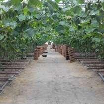 Продается действующее тепличное хозяйство 67,5 Га, в Краснодаре