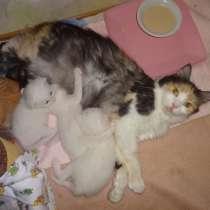 Резервирование необычных котят от клубных родителей, в г.Мариуполь