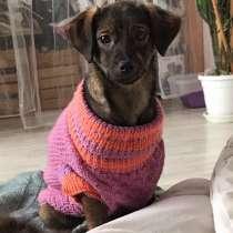 Собака Феня, в Краснодаре