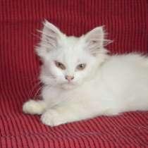 Котята чисто БЕЛЫЕ 2,5 месяца, ! НЕ дорого !, в г.Луганск