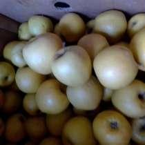 Рассада от производителя, свежие яблоки, в Орле