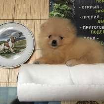 Мальчик-померанчик, в Москве