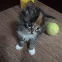 Продаются котята мейн-кун, в Челябинске