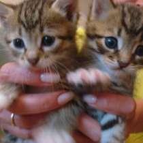 Подарим котят, в г.Запорожье