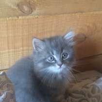 Котята, в Кемерове