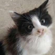 Отдам котят в хорошие руки, в Ялте