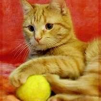 Добрый ласковый Мускат. Хороший кот для хороших людей, в Москве