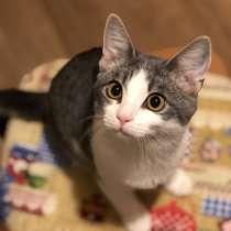 Кошка в добрые руки, в Лобне