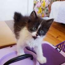 Котята в дар от ангорской кошки, в г.Минск