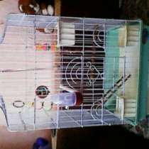 клетка для средних попугаев, в Омске