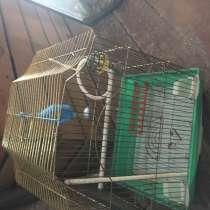 Клетка для попугая большая, в Владивостоке
