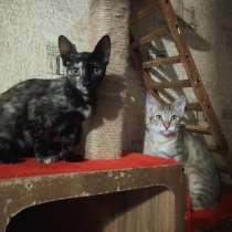 Котята, в Волгограде