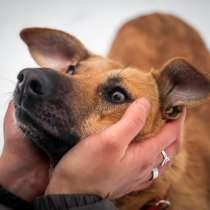 Фрея - собака ищет дом, в Москве