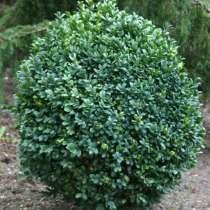 Декоративные растения Flora - Dekor, в г.Гродно