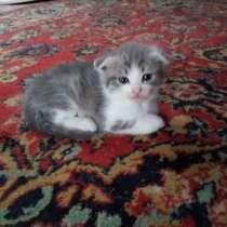 Котёнок в хорошие руки, в Липецке