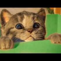 Ищу котёнка, в Выксе