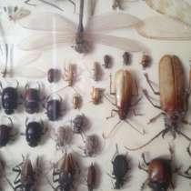 Африканские бабочки, жуки, пауки, в Москве