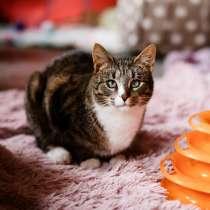 Мурлыка-котик со слепыми глазками ищет дом, в Санкт-Петербурге