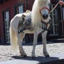 Большой и маленький конь на сундет той, в г.Алматы
