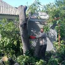 спилим любые деревья с вывозом мусора, в Тамбове