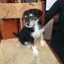 Ласковые щенки (1,5 месяца) отдам в добрые руки, в Коркино
