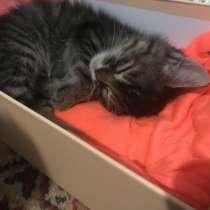 Подарю котёнка, в г.Кишинёв