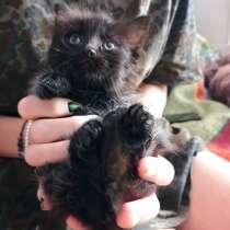Котенок черный, в Твери