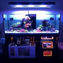 Изготовление морской аквариум на заказ в Севастополе, Крыму, в Севастополе