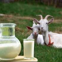 Молоко козье, в Крымске