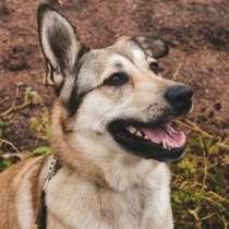 Идеальнейшая общительная собака ищет дом, в Санкт-Петербурге