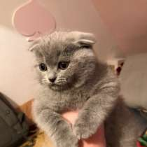 Продаю котят!, в г.Париж