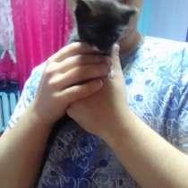 Отдадим котят в добрые руки только добрые руки.Анастасия и В, в Пикалево