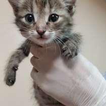 Котята в добрые руки, в Улан-Удэ