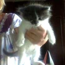 Котята 2 месяца, в Екатеринбурге